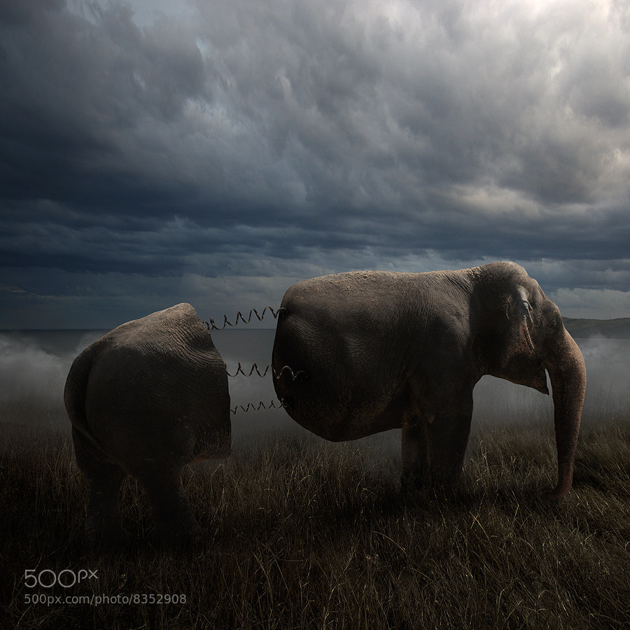 Photograph Tramelephant by Tomasz Zaczeniuk on 500px
