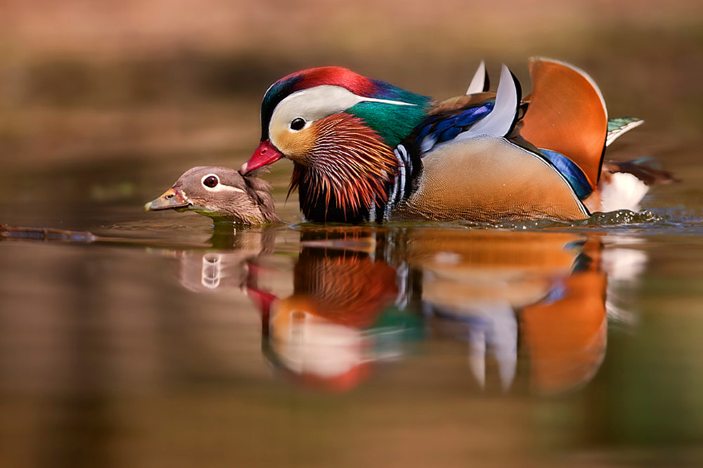 Photograph privacy violated by Stefano Ronchi on 500px