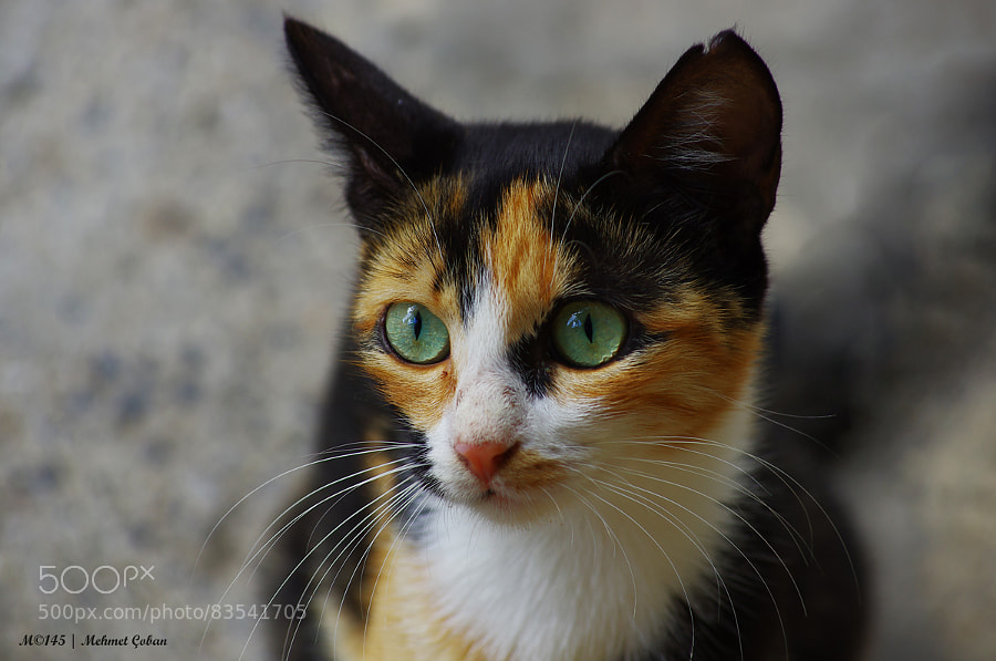Photograph green eyes by Mehmet Çoban on 500px