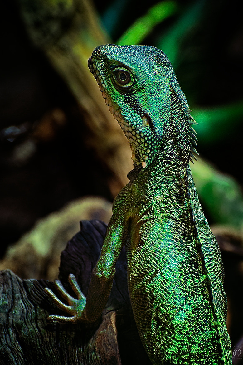 Photograph Mr. Lizard by Christian Meermann on 500px