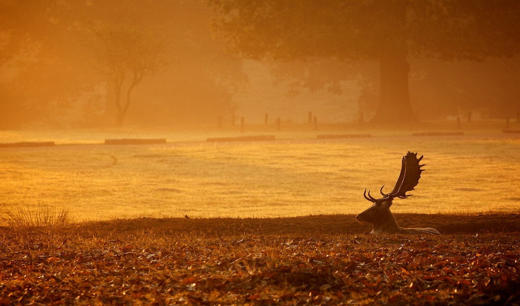 Photograph morning by Mark Bridger on 500px