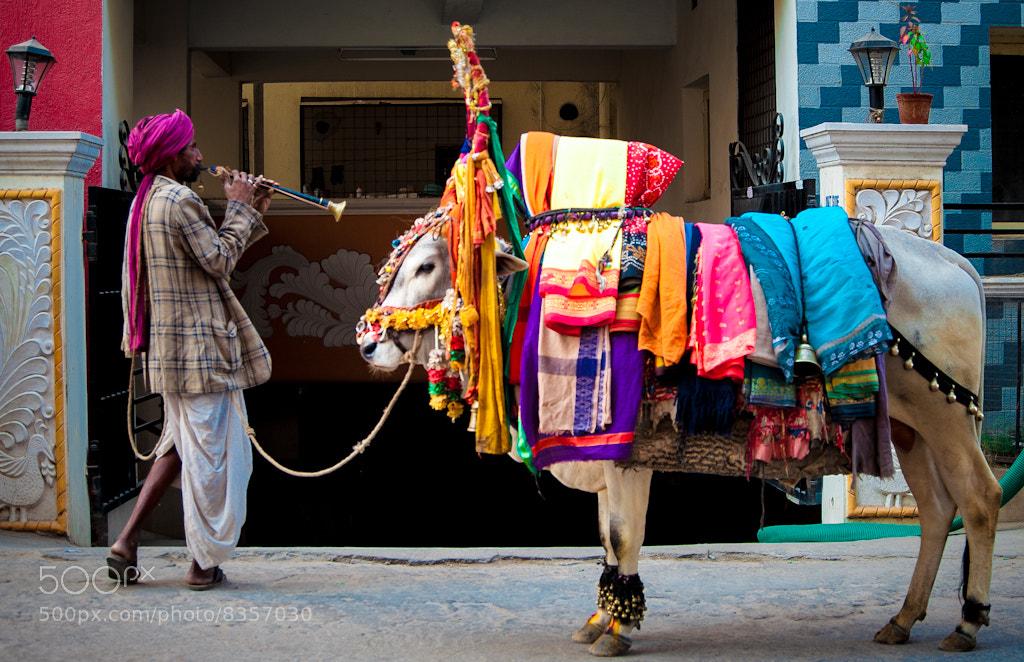 Photograph Festive Season by Rajesh Devabhaktuni on 500px