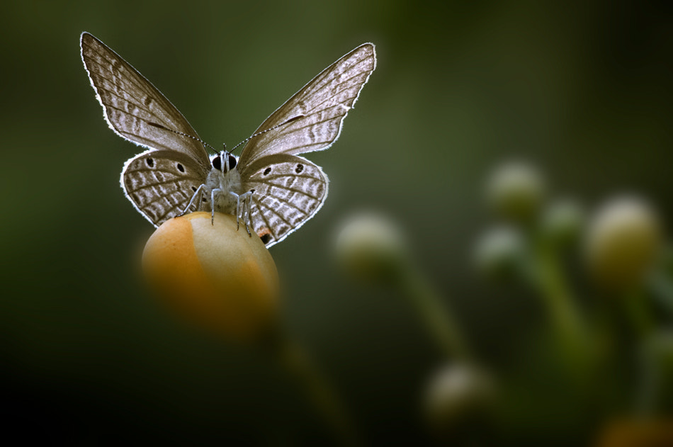Photograph I want to fly by Beni Arisandi on 500px