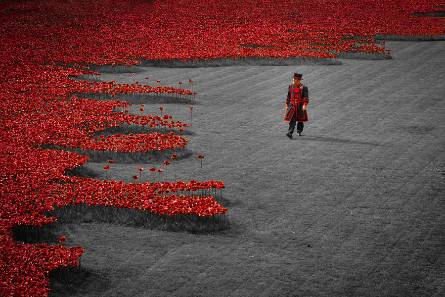 Beefeater and the poppies by Raymond van der Hoogt on 500px.com