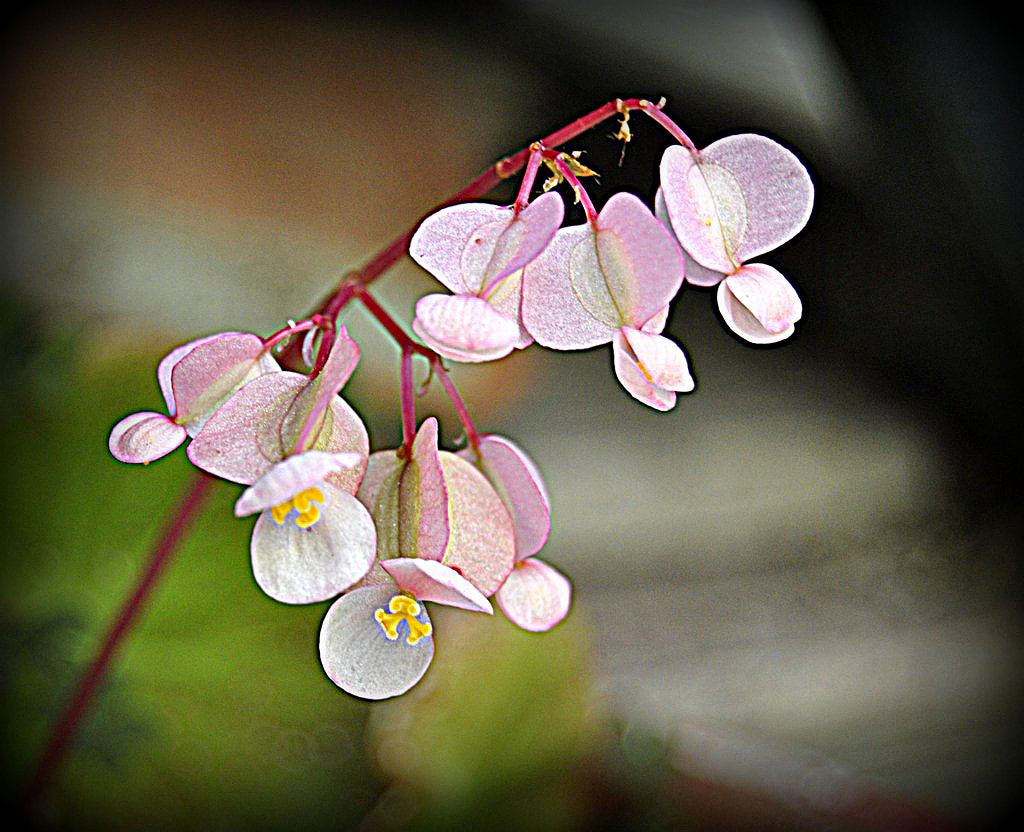 Photograph Delicate by mc rr on 500px