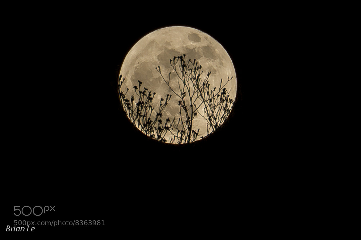 Photograph Spring Moon by Brian Le on 500px