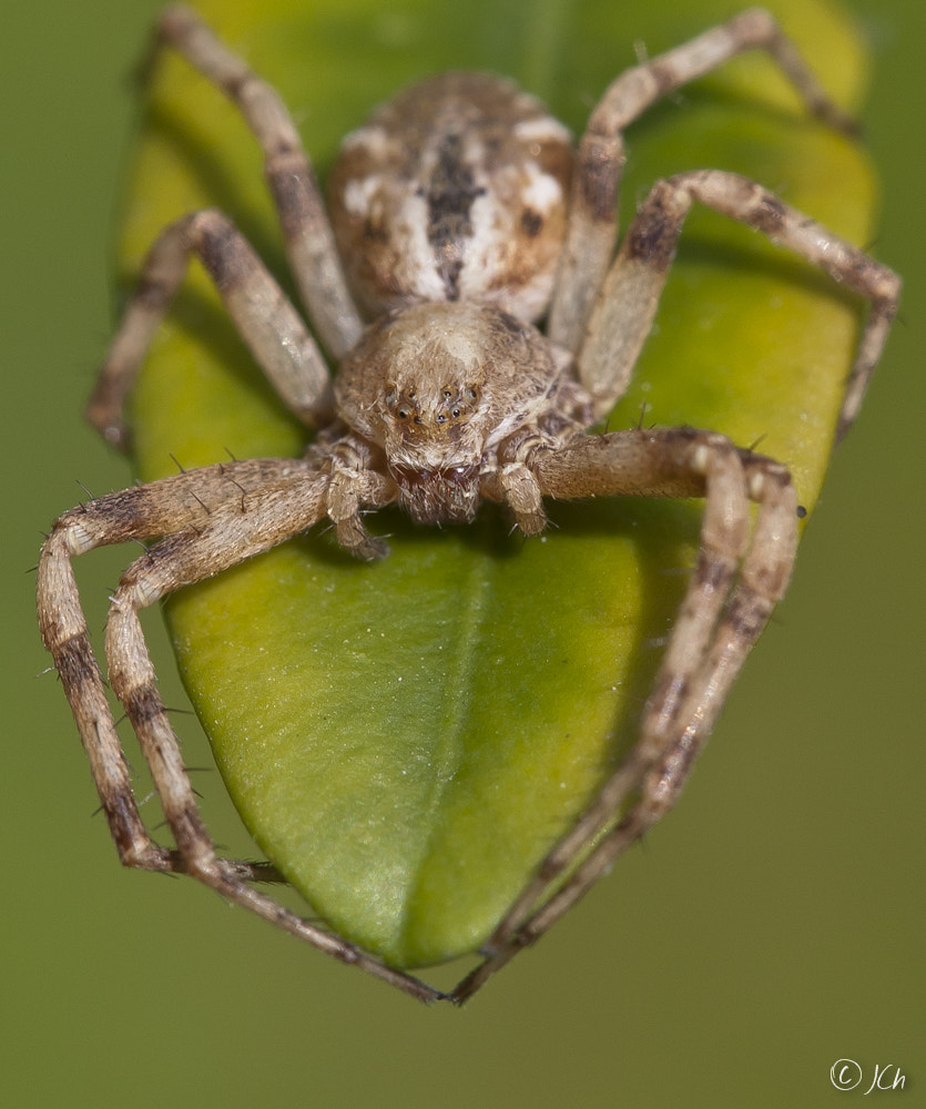 Photograph Undefined spider... by Johan CHABBERT (JCh) on 500px