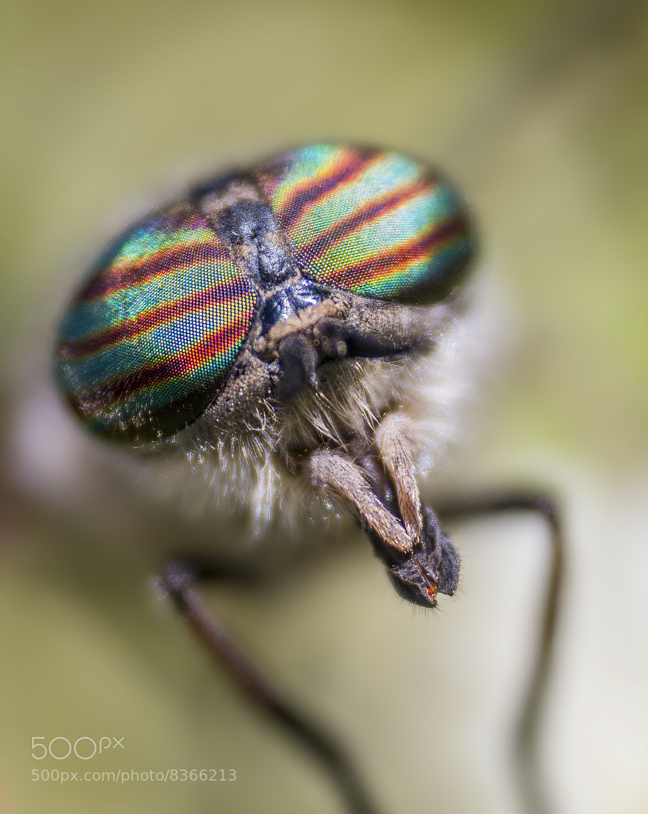 Photograph housefly by yousef khoram on 500px