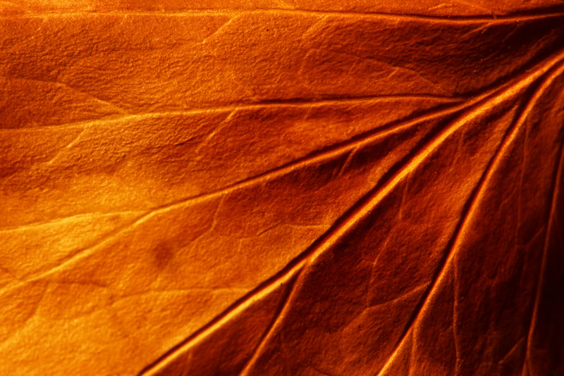 Photograph old leaf by Manfred Huszar on 500px