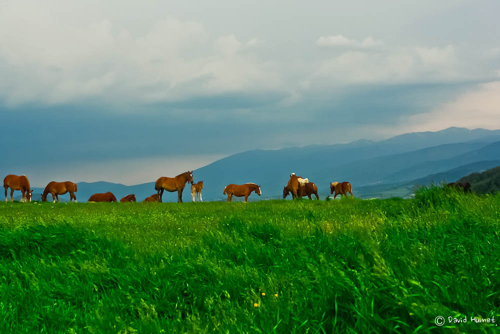 Photograph Cavalls a Cerdanya by David Humet on 500px