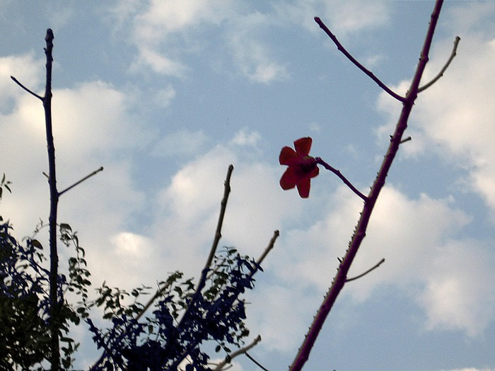 Photograph Lonely Flower  by Basant Soni on 500px