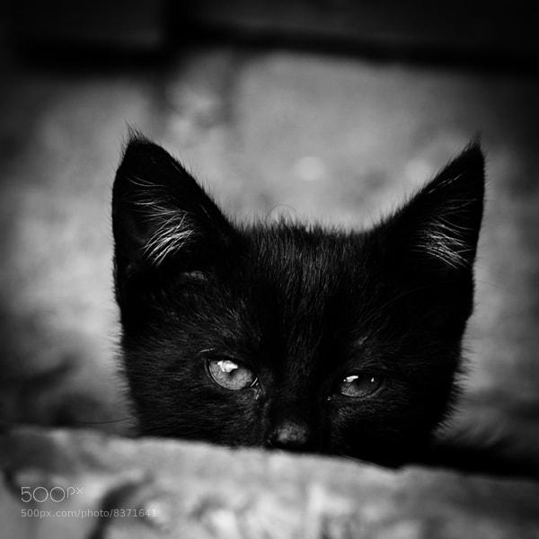 Photograph Little Satan by Jurriaan de Jongh on 500px