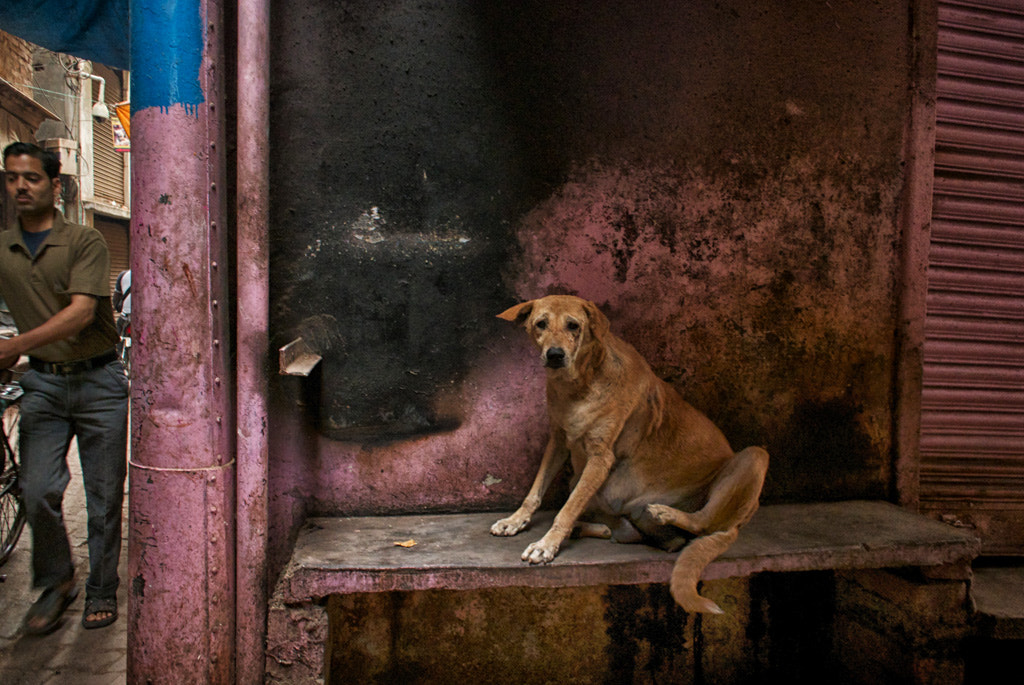 Photograph Itchy Dog by Blindman shooting on 500px