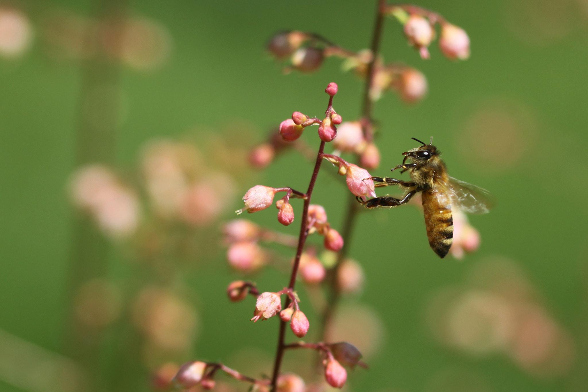 Photograph Honeybee Enjoying A Miracle by Kenneth  Maurer on 500px