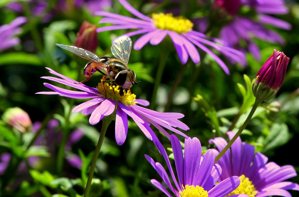 Photograph Wasp on flower by Rainer Leiss on 500px