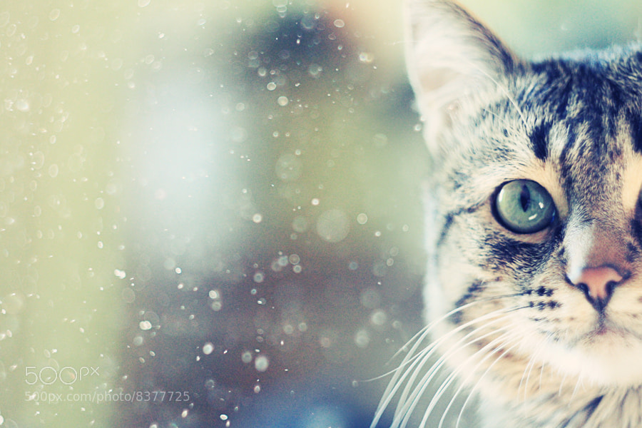 Photograph Dusty by the74k  on 500px