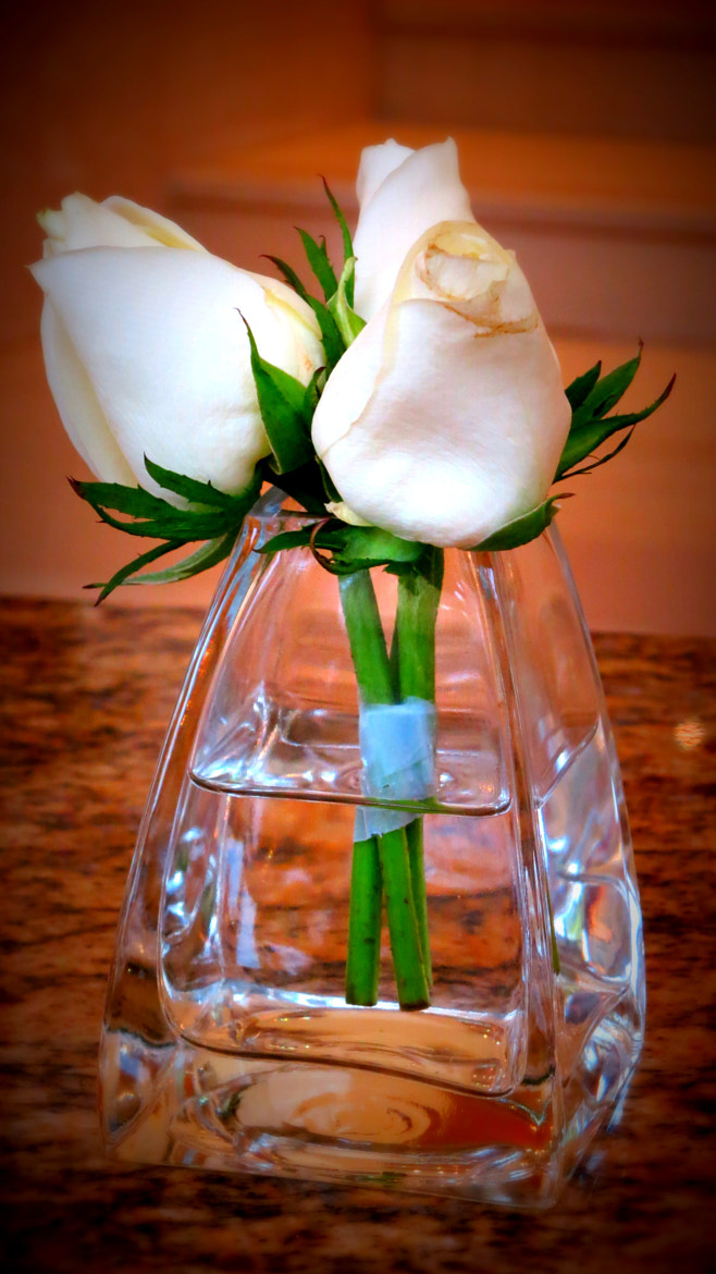 Photograph White Roses by Erdi Sam on 500px