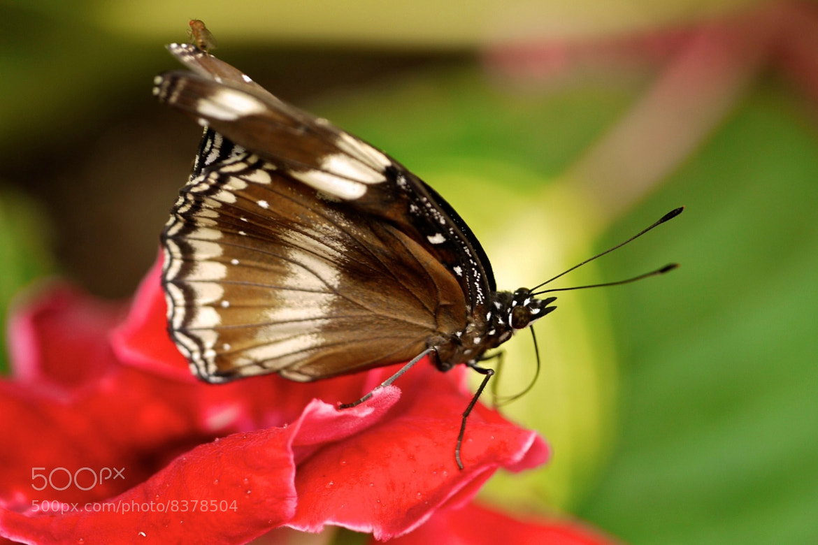 Photograph Free ride by Ann Giles on 500px