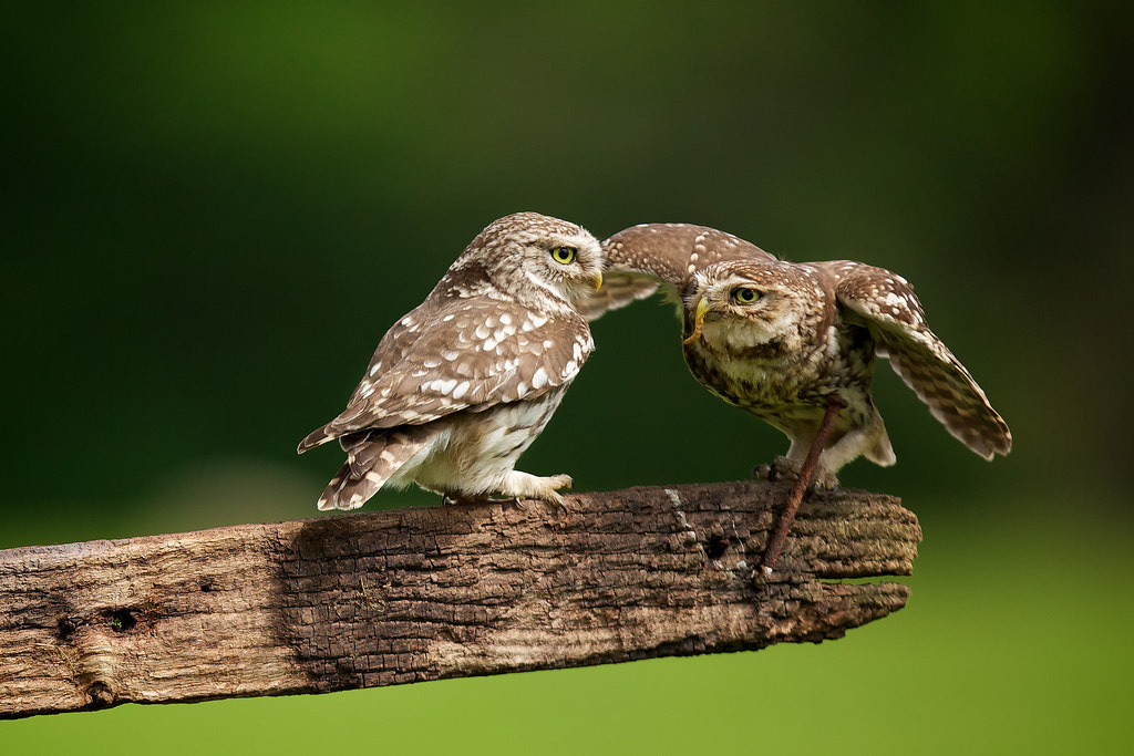 Photograph dinner date by Mark Bridger on 500px