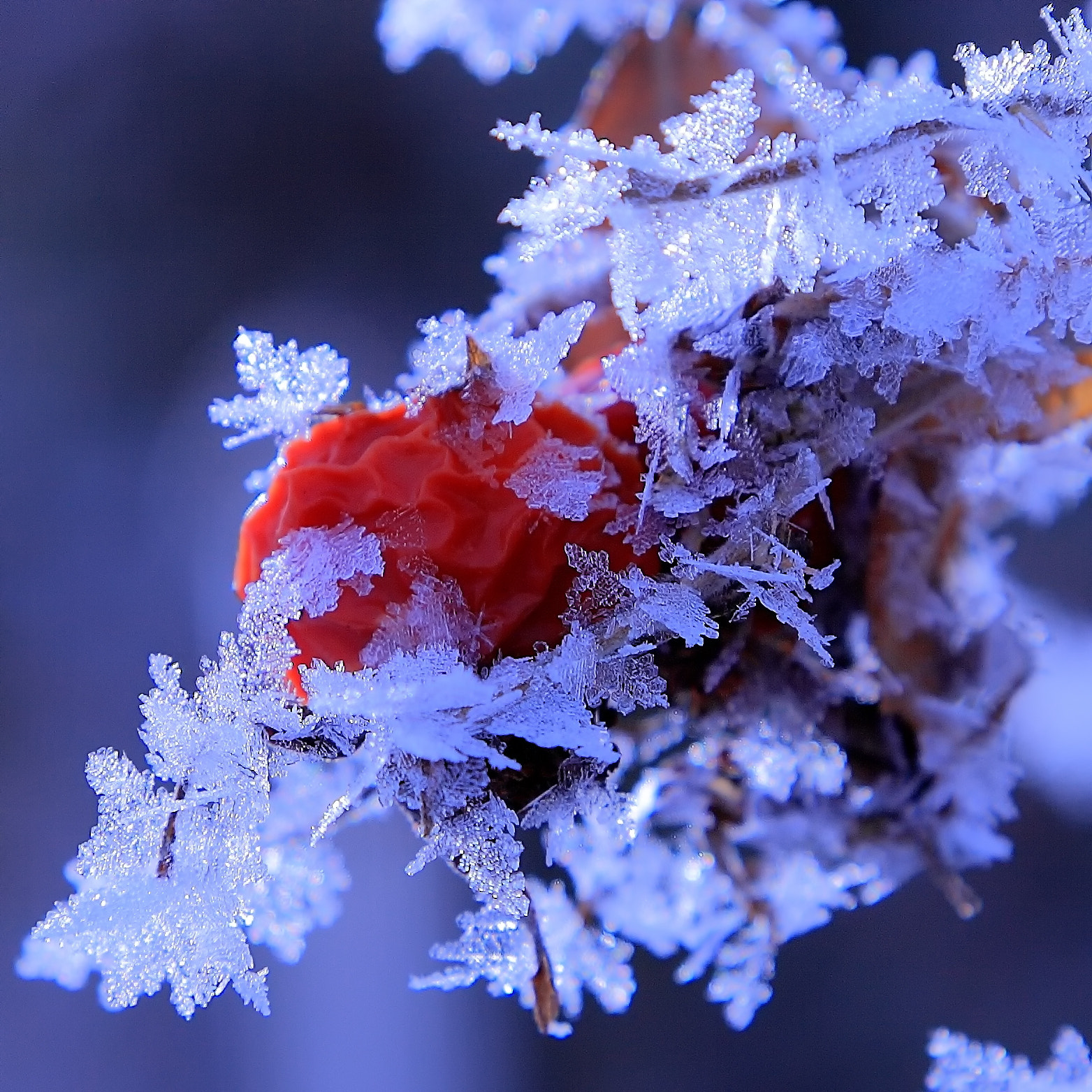 Photograph Ice Crystal(霧氷) by yume . on 500px