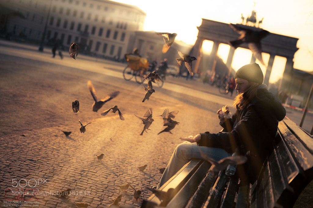 Photograph Berlin's birds by Sergio Del Rosso on 500px