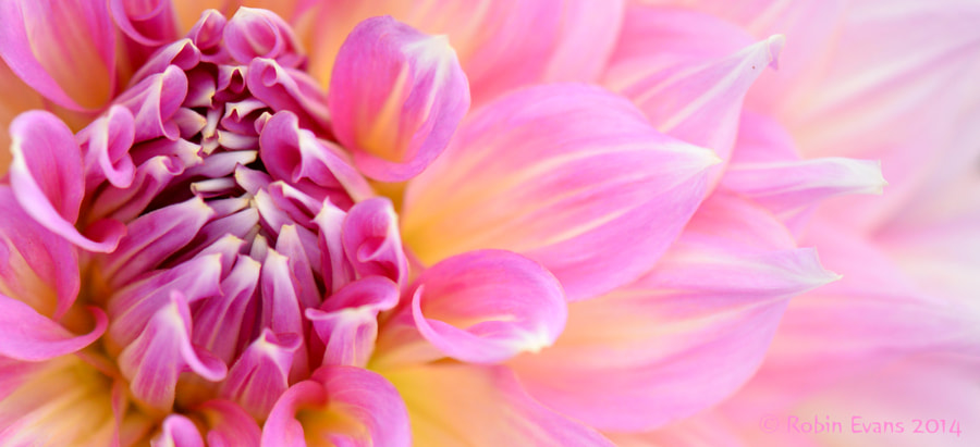 A Pinker Shade of Pale by Robin Evans on 500px.com