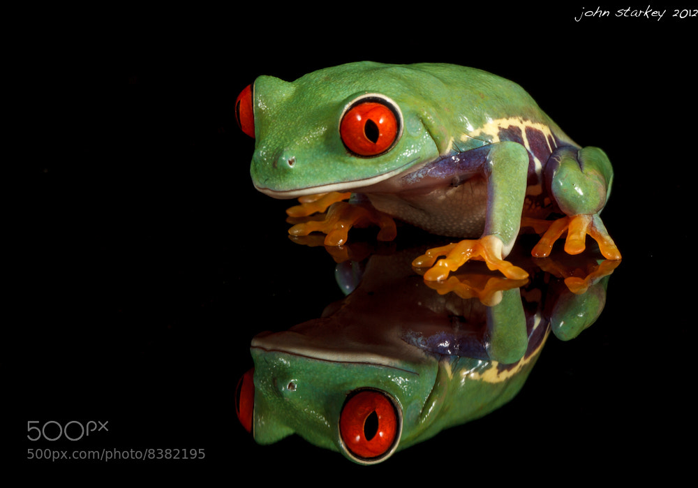 Photograph Seeing Double (Red eyed tree frog) by John Starkey on 500px