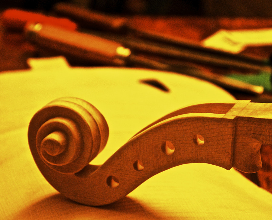 Work in progress for the construction of a Cello of the Master Luthier Remo Schiavi - Monsampolo (AP)