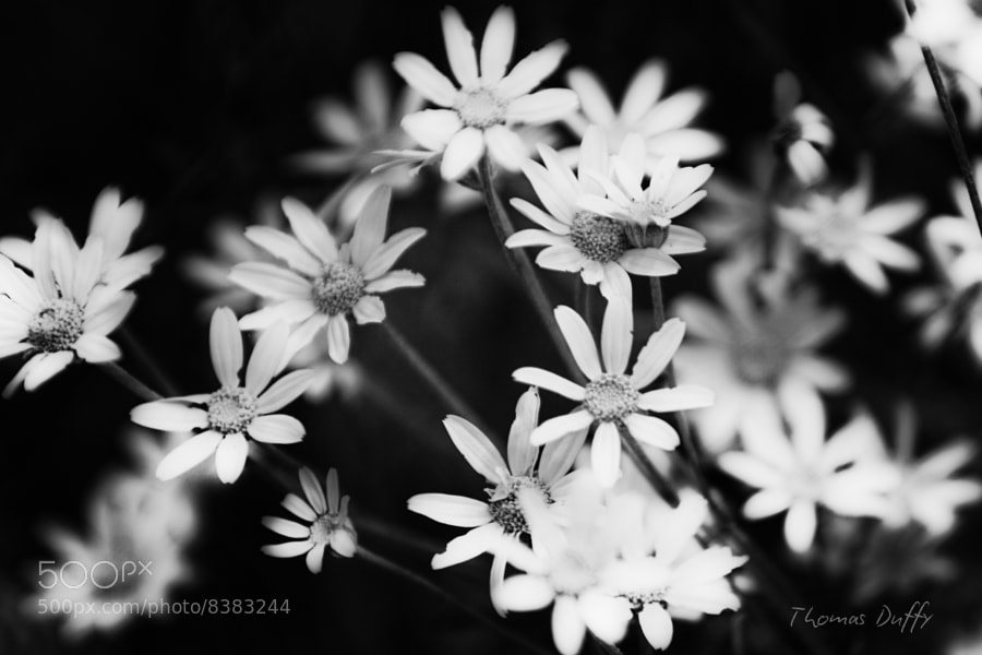 Photograph B/W Flowers by Thomas Duffy on 500px