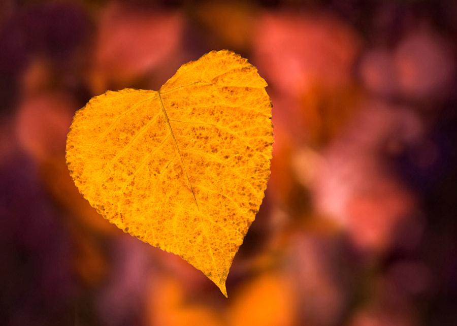 From autumn with love de Gergana Genova sur 500px.com