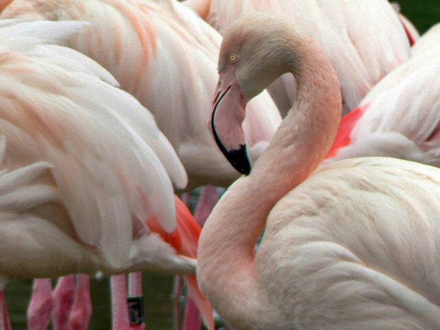 Photograph Flamingo by Ruth Lizzy Justen on 500px