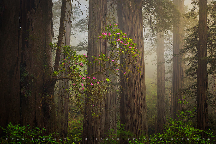The Gift Tree by Sean Bagshaw on 500px.com