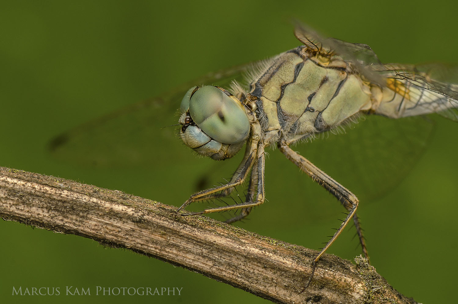 Photograph dragonfly up close by Marcus Kam on 500px