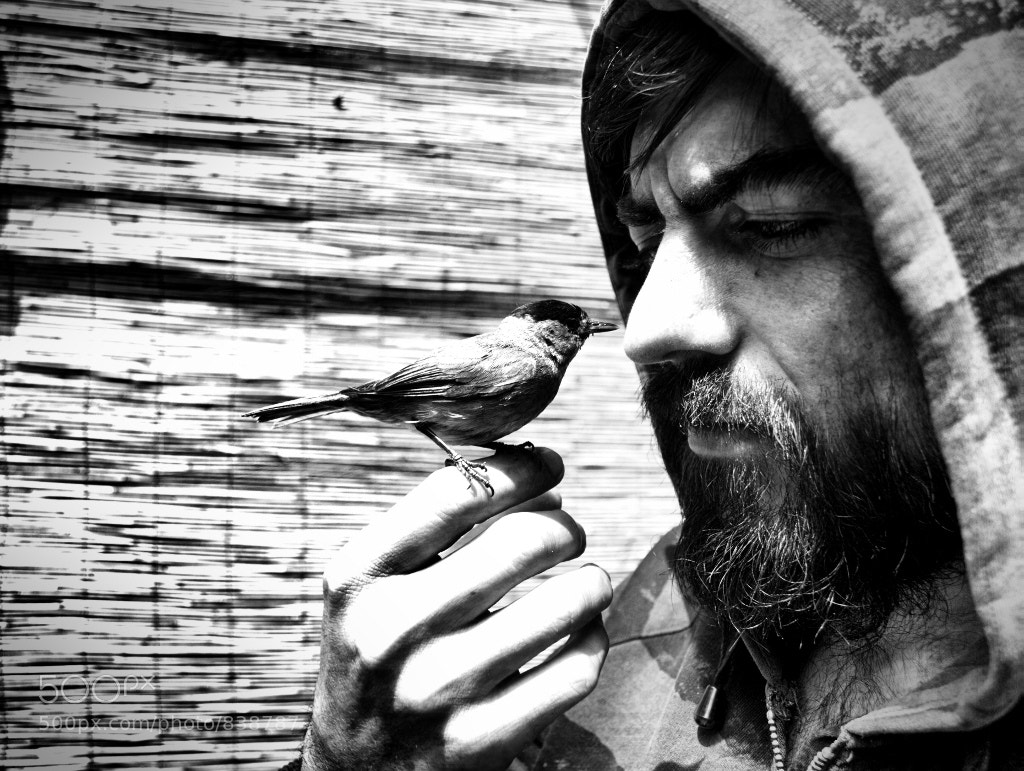Photograph The bird & the man by M Trombone Trompette on 500px