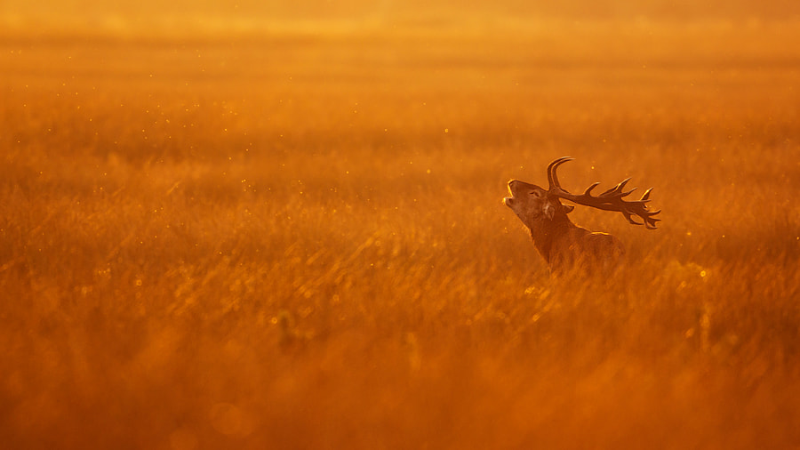 Golden hour, автор — René Visser на 500px.com