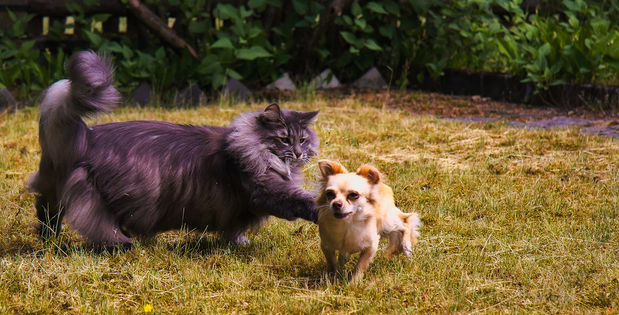 Photograph Cats and Dogs by Heike Schein on 500px