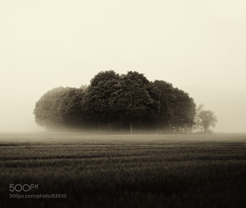 Photograph Fog trees by Matthias Heiderich on 500px