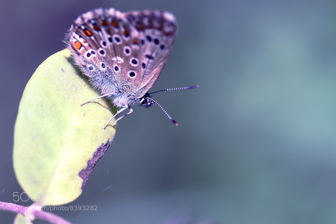 Photograph Near the butterfly by L'Oiseau Rose on 500px