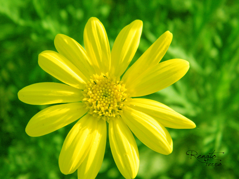 Photograph YELLOW by Renato Ferro on 500px