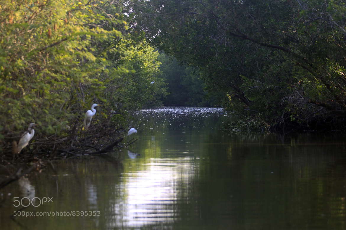 Photograph River and Egrets way by Cristobal Garciaferro Rubio on 500px