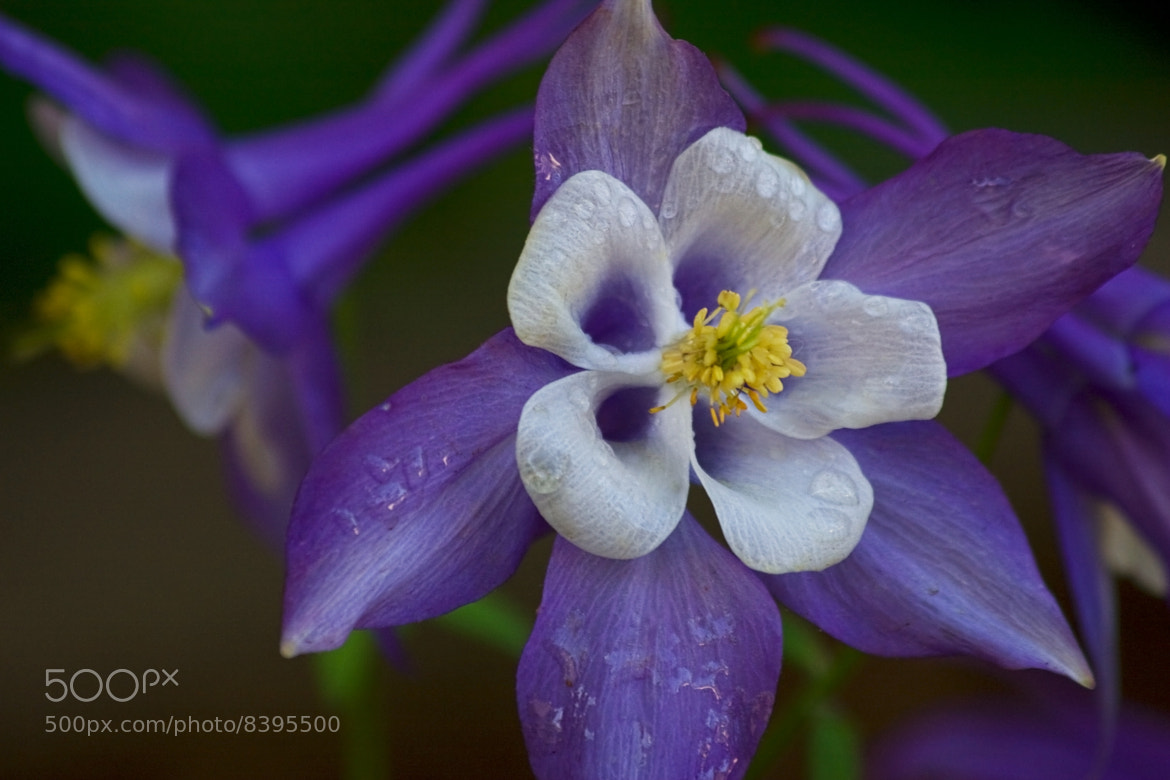 Photograph In The Garden by Nicholas Guitard on 500px