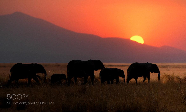 Photograph Elephants and sunset by Víctor J. Correa Nazco on 500px