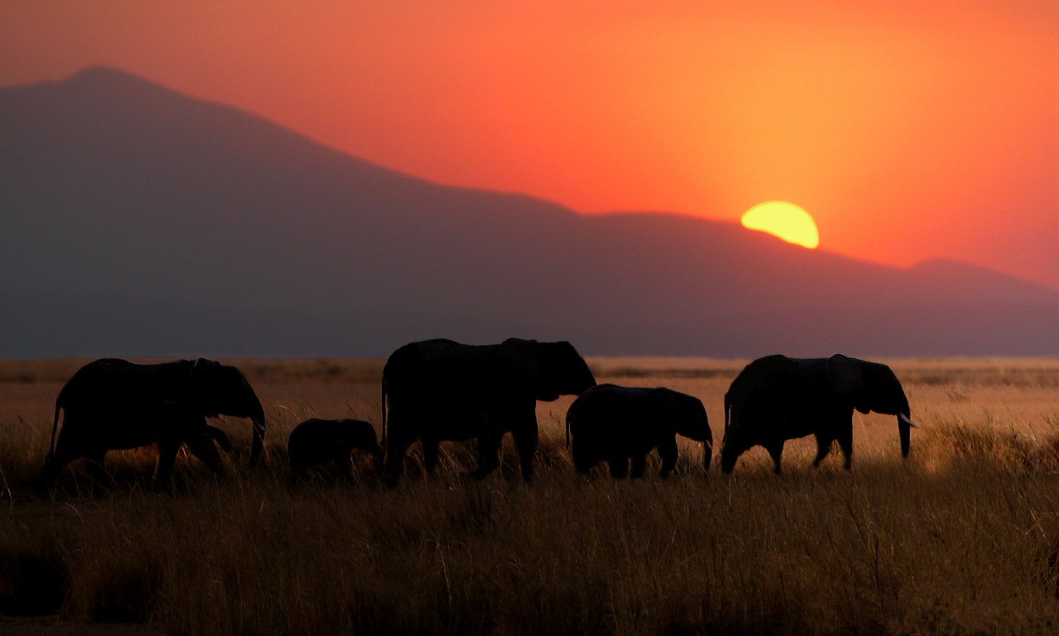 Photograph Elephants and sunset by Víctor J. Correa Nazco on 500px