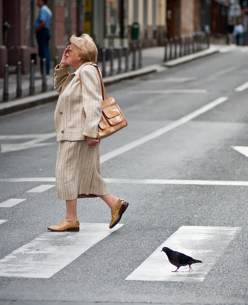 Photograph Pigeon crossing by Miroslav Rozic on 500px