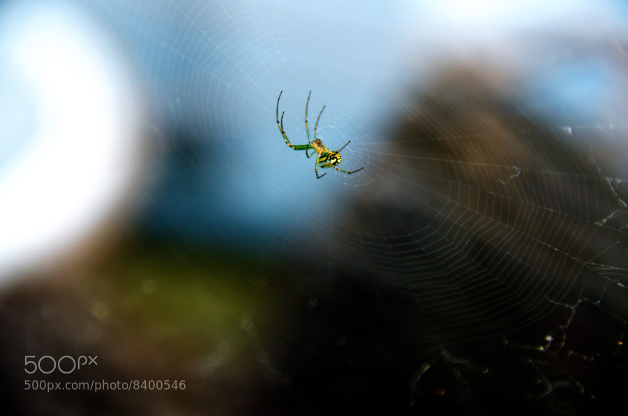 Color corrected version of Spider by C.K. Sample III (cksample) on 500px.com
