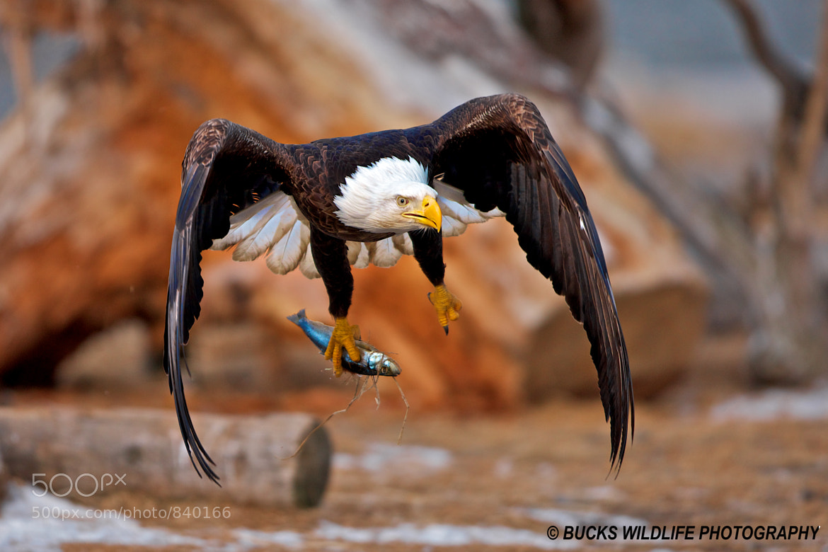 Photograph Stick and Fly by Buck Shreck on 500px