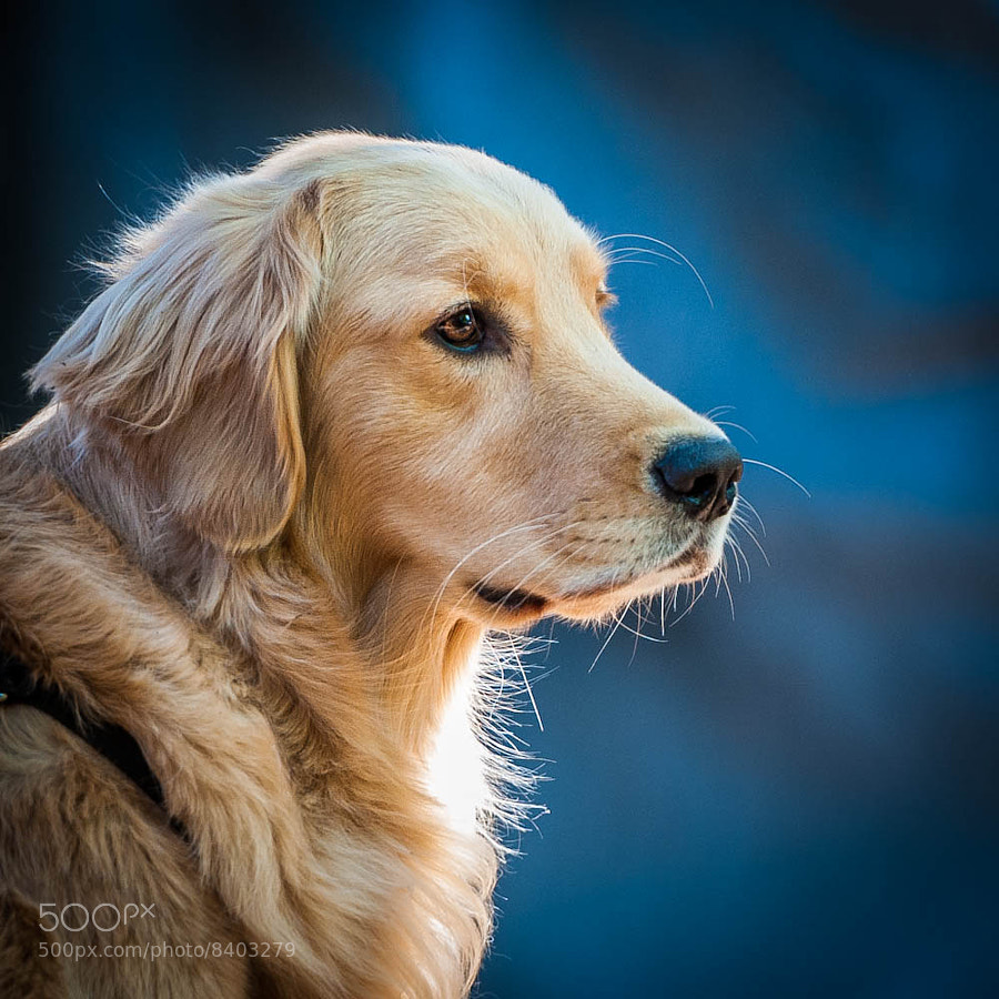 Golden moment - Photographing Pets Essential Tips