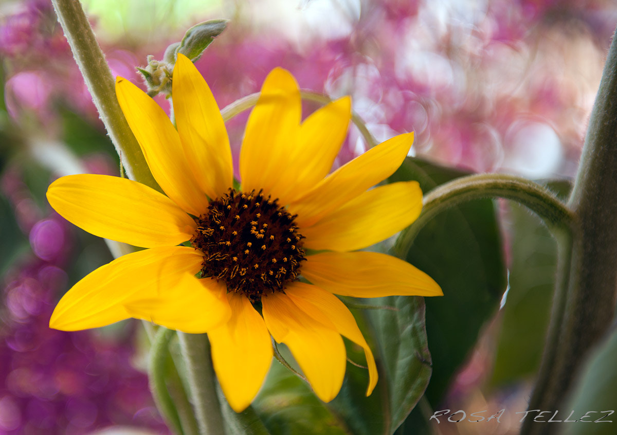 Photograph SOL NACIENTE by Rosa Tellez on 500px