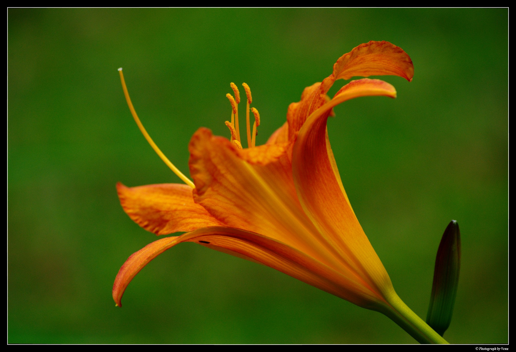 Photograph FLOWER by Venu  on 500px