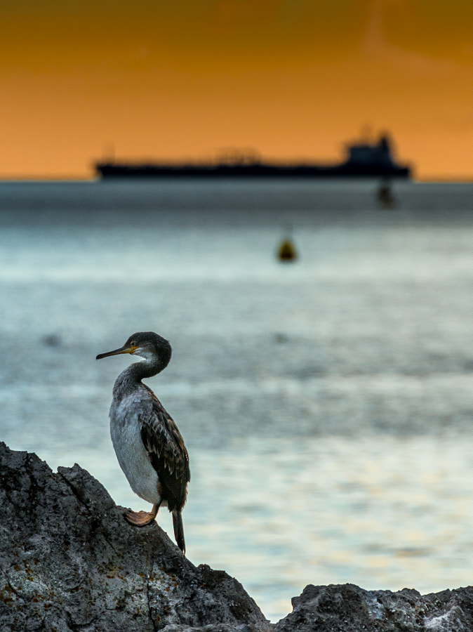 Photograph Rest and watch the boat by Jiri George Dolejs on 500px